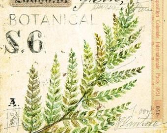 Fern Print, Leaf Illustration, Fern Illustration, Leaf Decor, Leaf Wall Art, Botanical Art, Botanical Illustration, Leaves Print