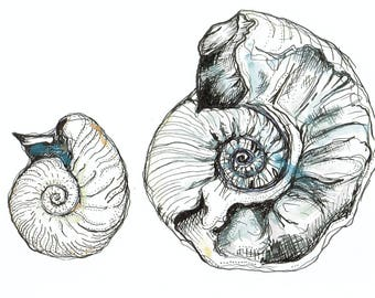 HIGH QUALITY PRINT ~ Natural History Fossil Pen and Watercolour Ink Painting Drawing Illustration ~ Archeology and Anthropology