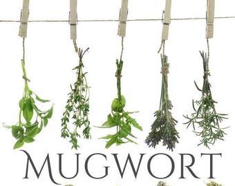 MUGWORT Dried Organic, Artemisia Vulgaris, Beesbotanics Herbal Remedy, Dream Pillow, Lucid Dreams, Ceremonial  Herb, Space Cleaning, Smudge