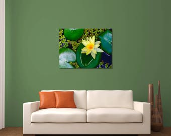 Lotus Flower, Water Lily Art, Fine Art Photography, Nature Photography, Nature Wall Art, Flower Photography, Lotus Print, Yellow Flower, Art