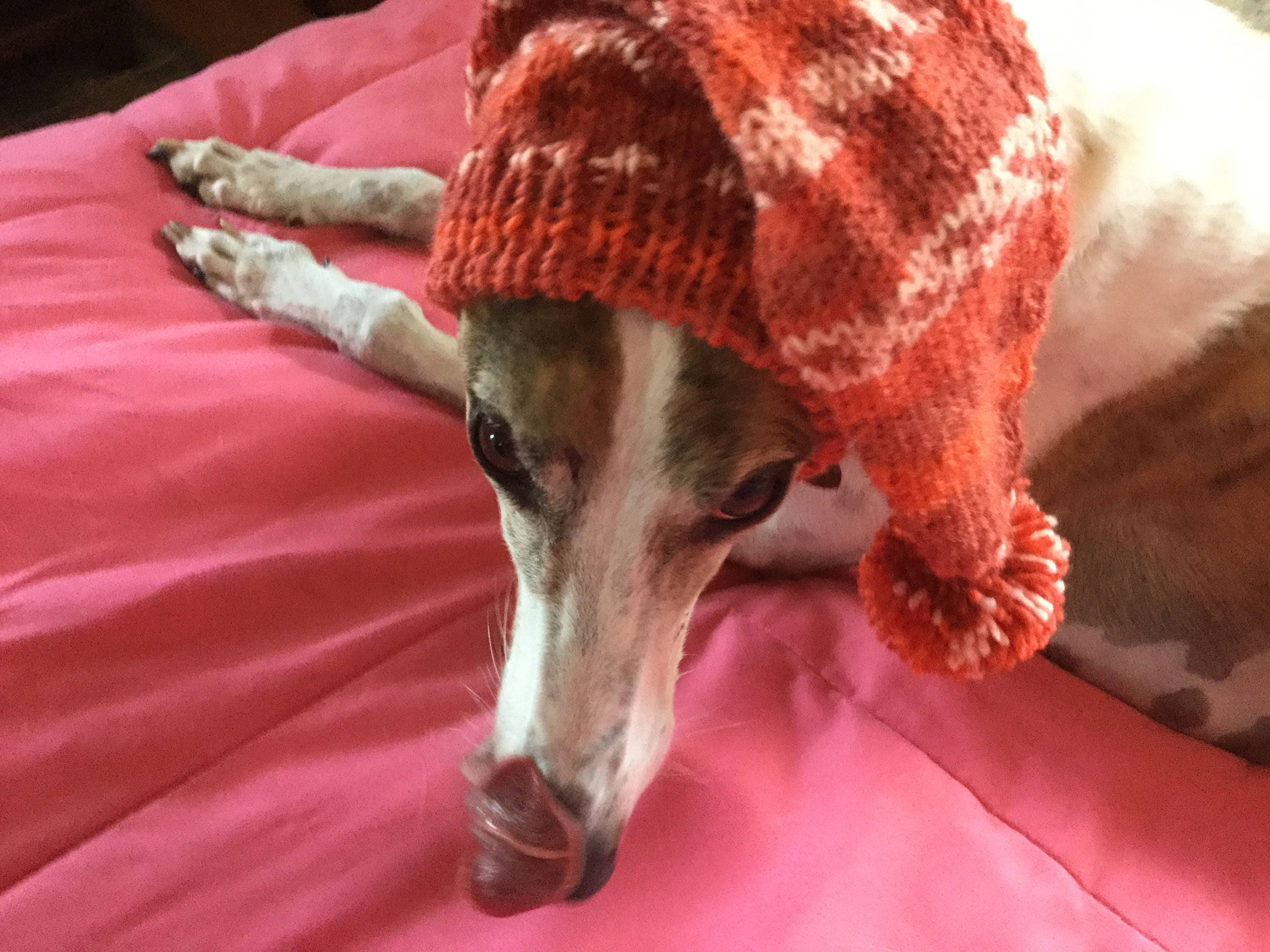 Pointed hat with snood for greyhound or other large sighthound gallery photo gallery photo gallery photo gallery photo gallery photo bankloansurffo Images