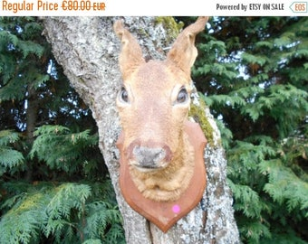 SALE 15% OFF Vintage French Wall Mounted Baby Doe Deer head (P)