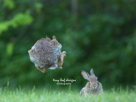 Leapfrog Bunnies! 10x10 Standout 5x7 8x10 Prints