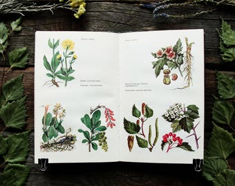 Medicinal Plants - 24 Color Plates - Hardcover - Vintage Botanical Book, 1989. Wild Herbaceous Drug Herbs Flowers Drawing Illustration Print