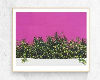 Pink, Greenery, Color Blocking 8X10 Wall Landscape Photograph Decoration