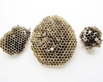 3 Real Found Natural Wood Pulp And Paper Wasp Nests #055