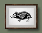 Hedgehog Skeleton Anatomy Print, from Original Ink Drawing. Scientific Illustration, Zoology, Bones, Life Science, Biology, Wall Art, Gift.