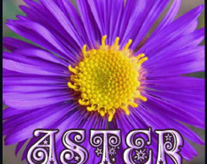 Angie's Aster - Private Edition - Concentrated Perfume Oil - Love Potion Magickal Perfumerie