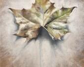 Leaves, Autumn Leaf Art, ...