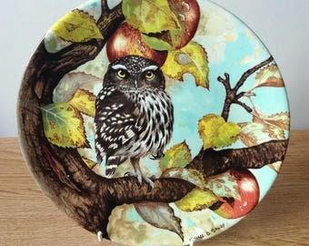 Coalport Fine Bone China Plate 'Little Owl' by Artist Michael B. Sawdy, Made in England