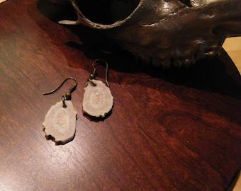 Deer antler earrings, deer antler jewelry, rustic earrings, organic earrings, boho earrings,antler slice earrings