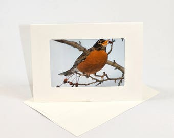 American Robin - Folded photo frame card