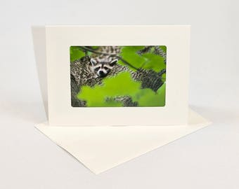 Northern Raccoon - Folded photo frame card