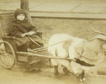 Cute RPPC of Goat Pulling Child In a Chair