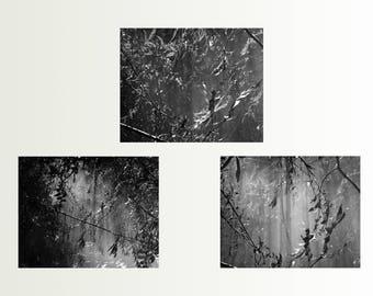 Set of 3 prints - Three printable art - Bathroom decor - Black and white photography - Forest wall art, Printable, Boho decor, 3 prints