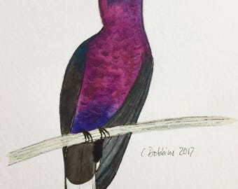 Bird Art Hummingbird Art Hummingbird Picture Original Watercolor Painting Violet Sabrewing Miniature painting  Purple Bird Colibri