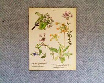 Genuine vintage framed botanical drawing, flower illustrations, botanical print, floral, in glass frame, yellow cowslip