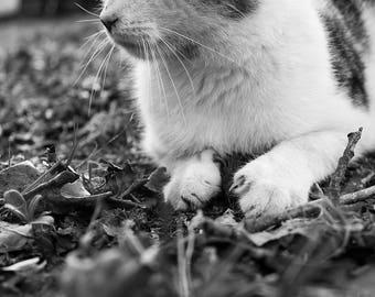 Fine Art Poster Print: Eddie #2 - photography - cat - black and white