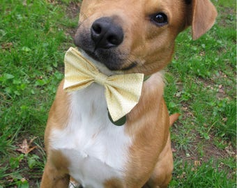 Wide Yellow Bow Tie