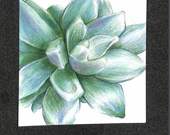 "Original Succulent Drawing 4""x4""(10.2cmx10.2cm)"