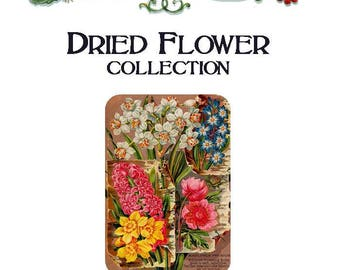 """Heirloom, non-GMO """"Dried Flower"""" Seed Collection"""