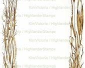 Digital Download Wild Grasses Frame, Illustration, Border, Vintage Victorian Clipart, Digital Collage