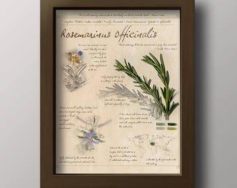 Rosemary Print - Rosemary Sketch Art - Kitchen Decor - Botanical Print - Vintage Style Print - Digital Download