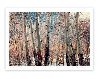 Aspen Trees   Winter Scene   Sunshine on Trees   Rustic Decor   Cabin Decor   Ski Lodge Decor   Colorado   Rocky Mountain National Park