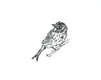 Sketchbook Sale - Bird #17 Original Ink Line Drawing - 8x10 Songbird Original Art