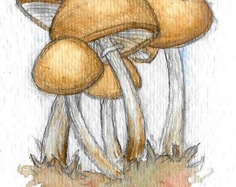 Deadly Skullcap (Galerina autumnalis)