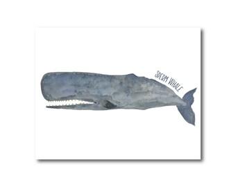 Sperm Whale Watercolor Illustration Fine Art Wall Decor Home Decor Giclee Print