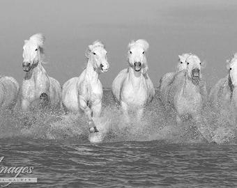Camargue Horses Running - Fine Art Horse Photograph - Horses - Camargue - Black and White - Fine Art Print