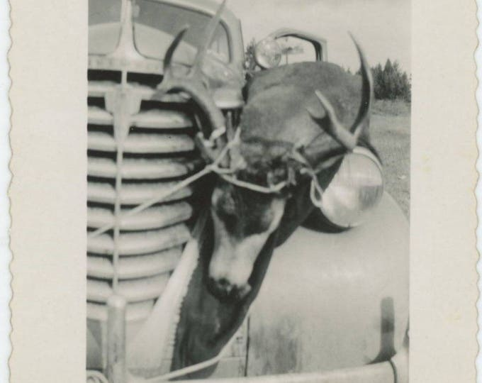 Vintage Snapshot Photo: Dead Deer Tied to Fender of Chevy Pickup, c1940s-50s (77595)