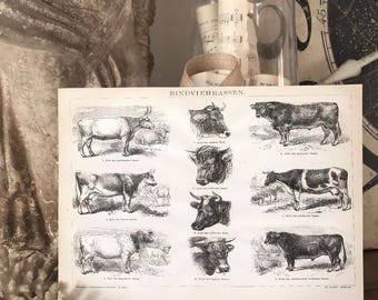 Vintage COW BREEDS CHART Wood Sign Print Farmhouse Decor Page Wall Art Print  Fixer Upper Decor Natural History  Spring Rustic Decor