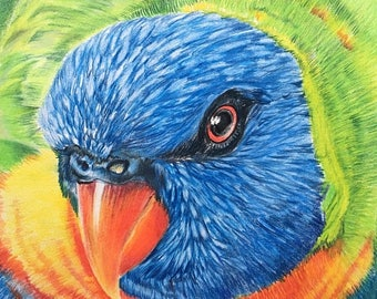 "20% off Lorikeet Drawing Original Coloured Drawing 8.5""x 8.5"". Wall Art, Home Decor, Lorikeet Art, Original Fine Art, Parrot drawing, Bird w"