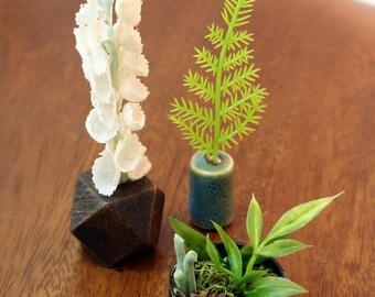 Set of 3 Miniature Vases - Talls + Terrarium Collection