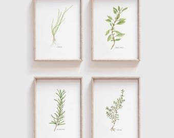 Set of 4 Herbs Watercolor Herb Print Kitchen Wall Decor Gifts for Mom Wall Art Set Herb Illustration 5x7 set 8x10 set Botanical Set Herb Art