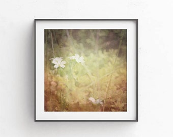 Brown prints - Flower photography - printables - white flowers - pastel picture - nature photo - brown wall decor - amber art, 12x12 print