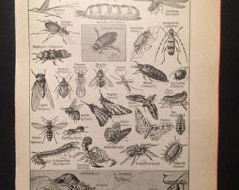 Arthropodes - Arthropods - Antique French Dictionary Page - Original 1940s Illustrated Lithograph