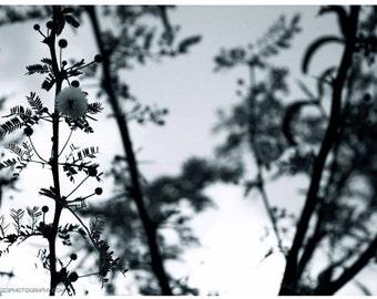 Wispy Flower Stalk Photograph — Tiny Puffball Flower — Black and White Nature Art Photo — Fern Garden Stems — Monochrome Garden Art Picture