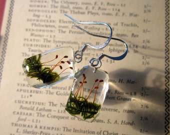 Moss (Hypnum sp.) Earrings,  bryophyte, woodland, forest, botanical, nature, surgical steel, sterling silver, cracked ice style