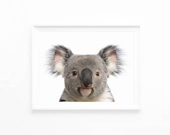 Koala Bear Art Print, Koala Printable, Koala Digital Download, Koala Printable Wall Art, Nursery Decor Art, Kids Room, Nursery Animal k1c3c1