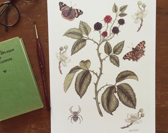 Blackberries and Butterflies A4 Giclee Print