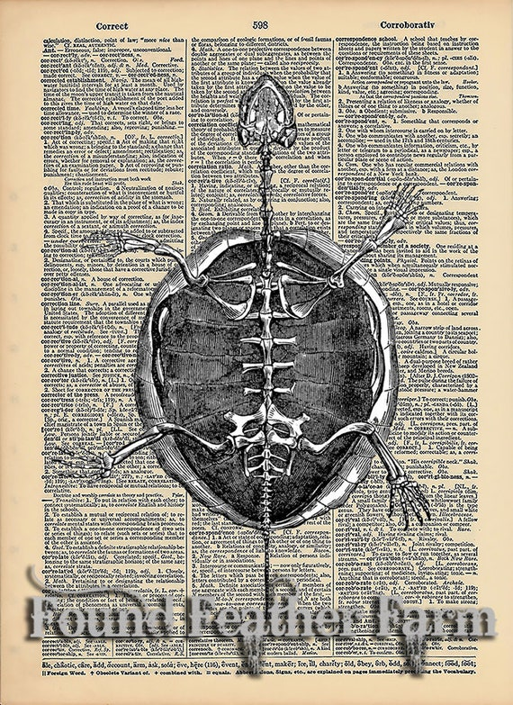 "Vintage Antique Dictionary Page with Antique Print ""Turtle Shell"""
