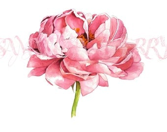 Watercolor painting | Peony | Open edition print | Wedding Mother's Day Valentine's Gift