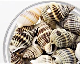 Seashell beads' wonderfully rustic, side drilled seashells, 17-21x12-14mm, 16pcs/1.80.