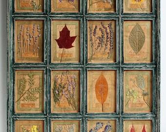 Real Pressed Vintage Style Herbarium, Original Herbarium Specimen Art, 30x22 inches (75x56 cm) Pressed Plants Framed Real Pressed Flower Art