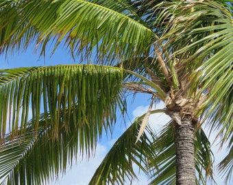 Aruba Palm Tree II