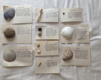 Shell Specimen Collection - 10 peices