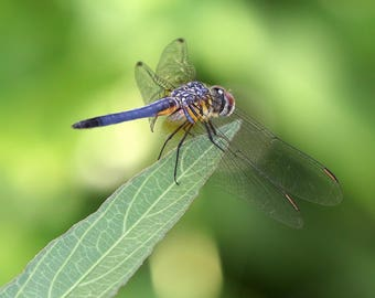 Dragonfly on the edge, nature, insect, art, photography,